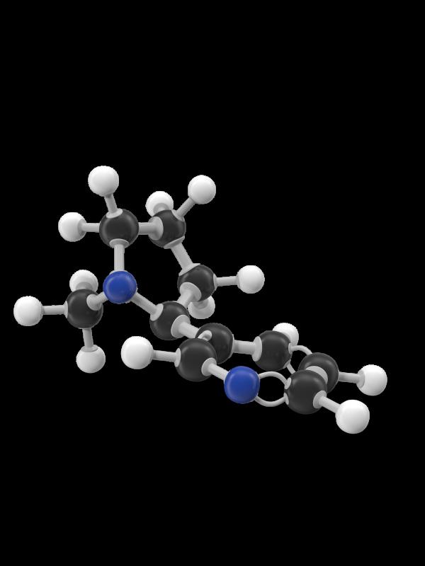 Nicotine Molecule.H03.2k